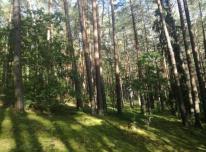 Gauk geriausią miško kainą. 864404447