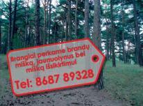 Nupirksime Jūsų mišką geriausiomis kainomis