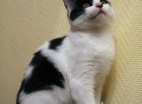 Sterilizuota katytė ieško namų