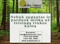 Nebūk apgautas ir parduok mišką už teisingą r