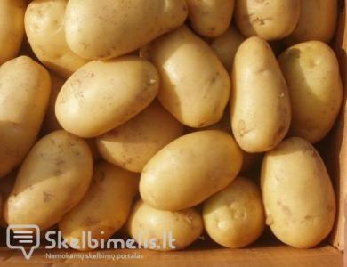Parduodu Dideles ir mažas Bulves Ir Kviečius