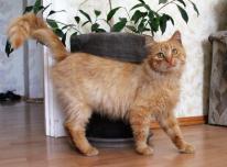 Dovanoju kastruotą, mielą katinėlį