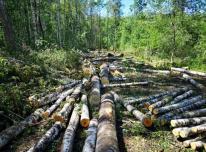 Miškas išsikirtimui. Miško kaina.